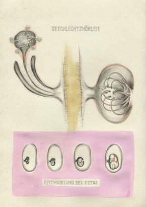 Homo Plantae