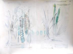 Plantae – Studien