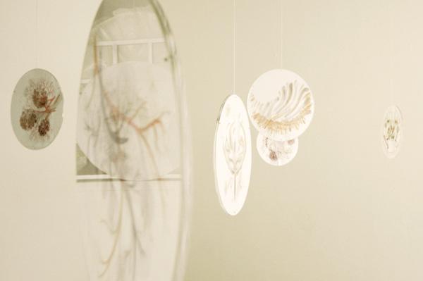 ORGANISM 2, installation view, Akademie Galerie, Nuremberg