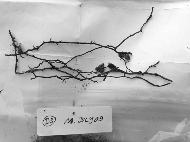ORGANISM 4 / Fungi, Research in Oregon, USA, findings