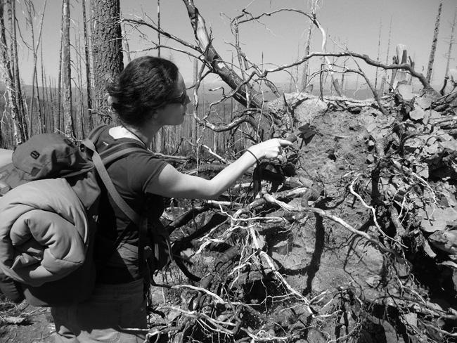 ORGANISM 4 / Fungi, Research in Oregon, USA