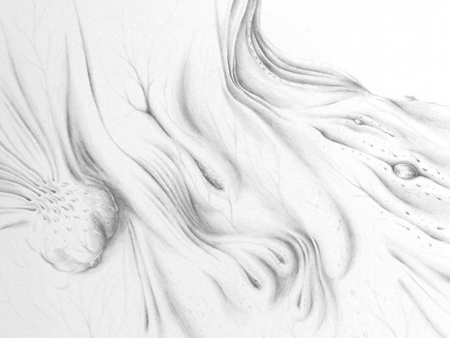 ORGANISMUS 6 / Derma #2, Detail
