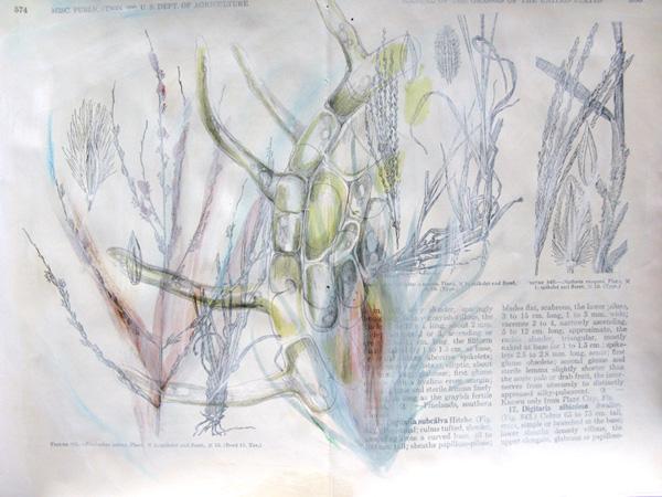 Plantae, Study #3