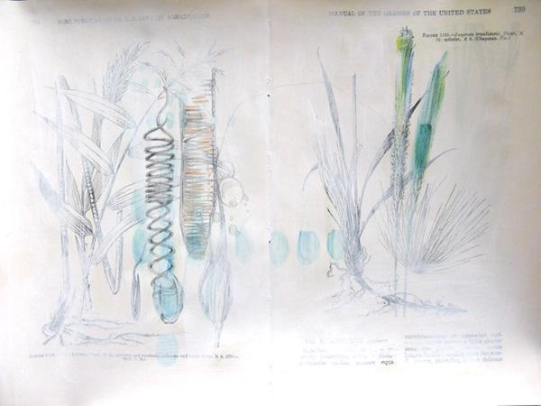 Plantae, Study #2