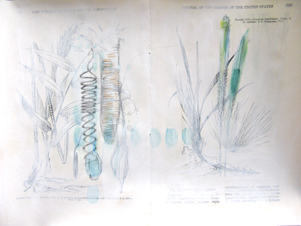 Plantae, Studie #2