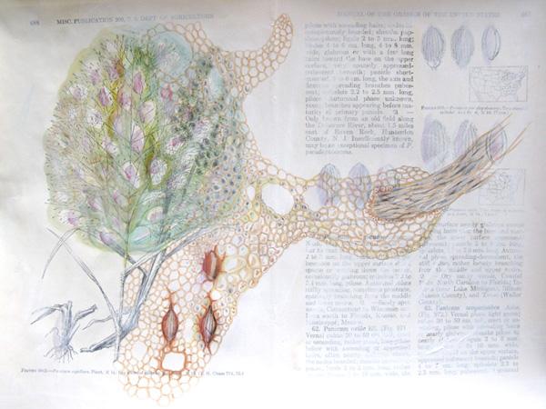 Plantae, Studie #4