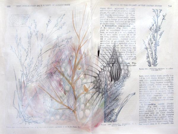 Plantae, Study #6