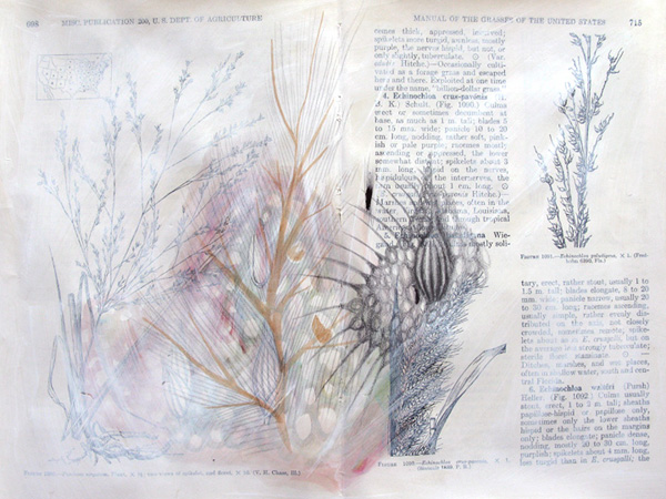 Plantae, Studie #6