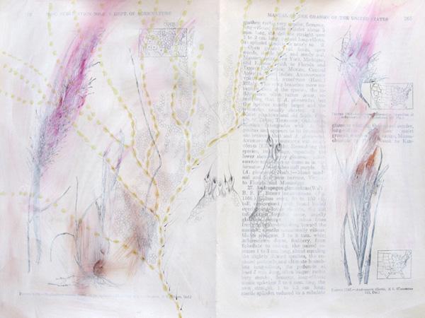 Plantae, Studie #5