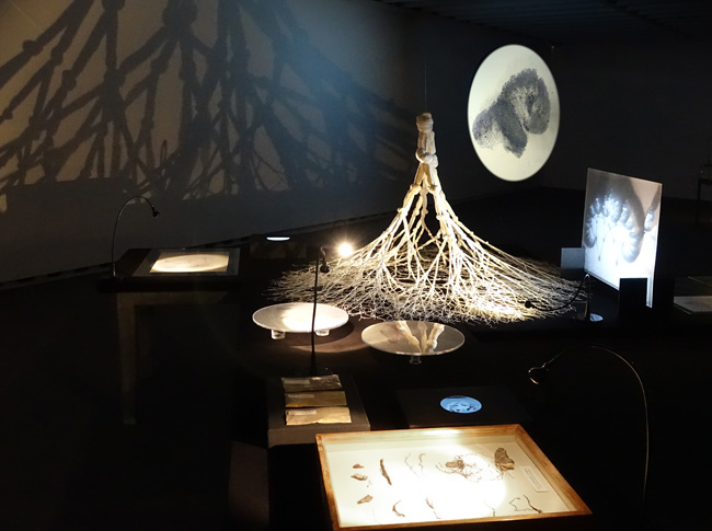 Universeller Stammbaum #3, Kunstverein Ingolstadt, 2014